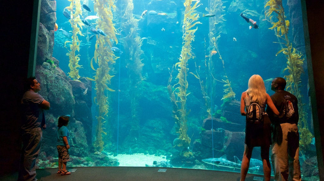 California Science Center showing interior views and marine life