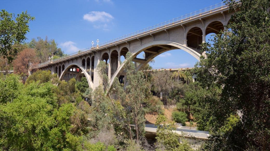 Pasadena featuring a bridge