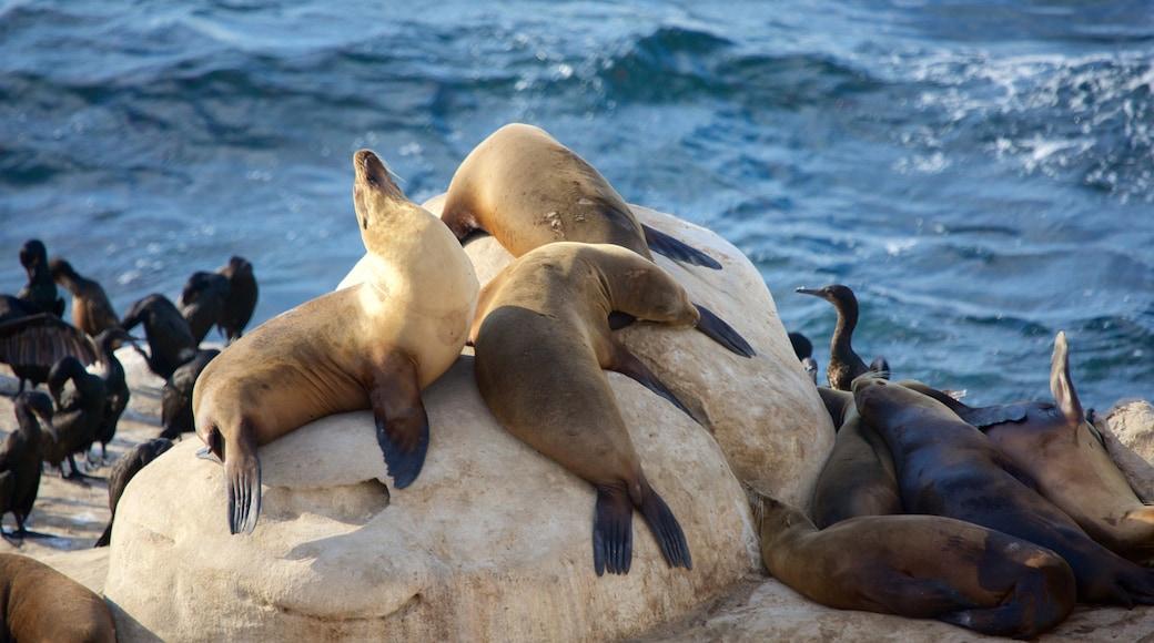 La Jolla Cove which includes dangerous animals