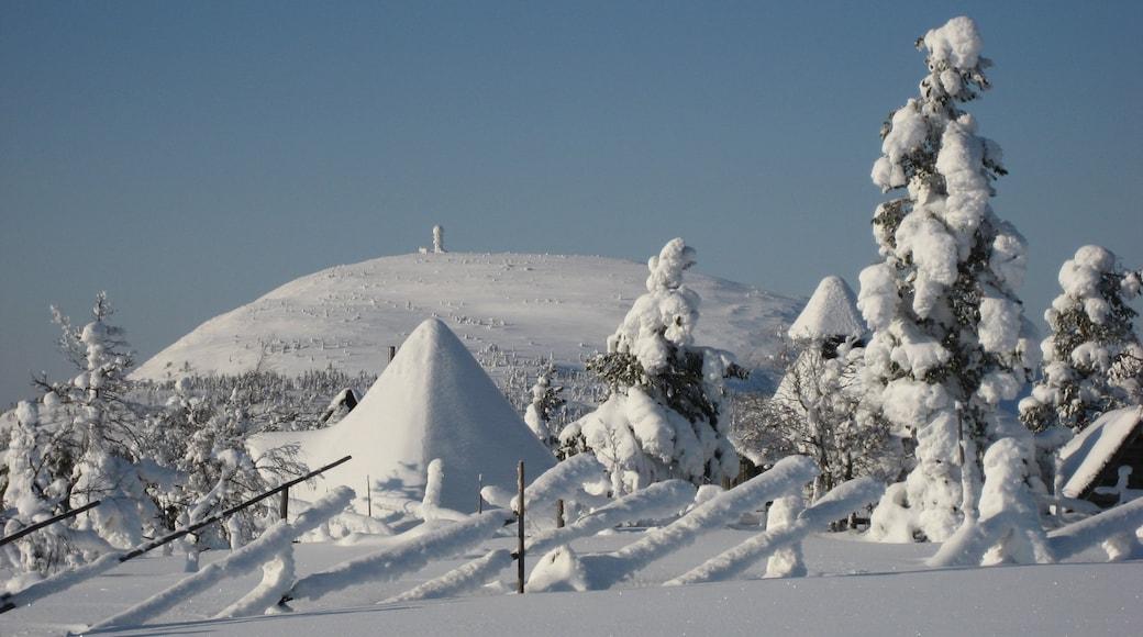 Luosto joka esittää lunta ja metsät