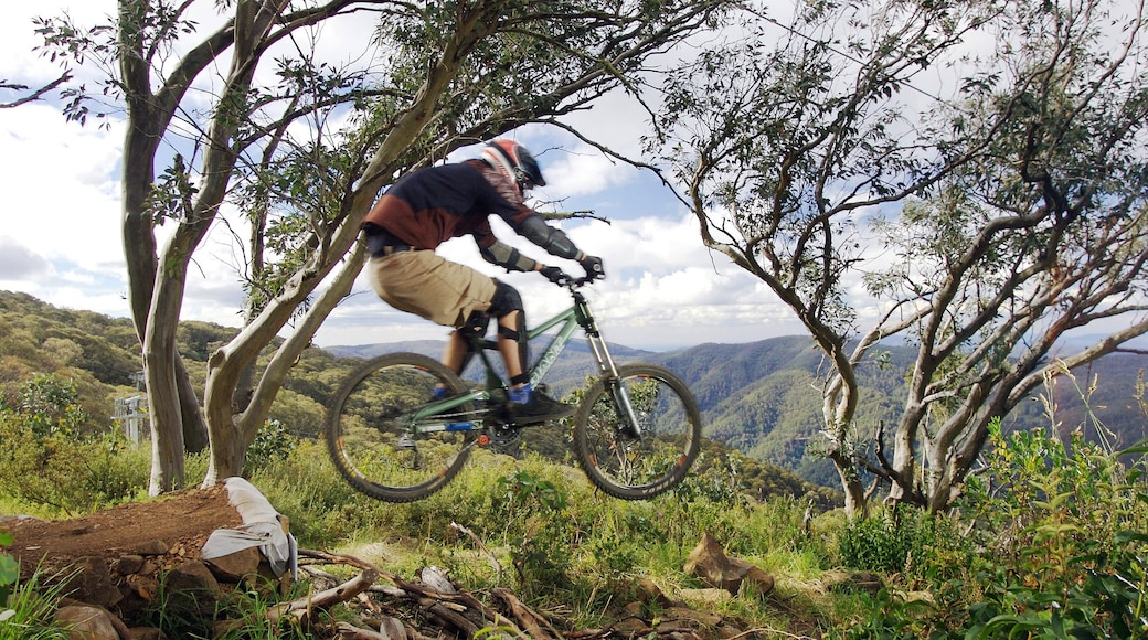 Mt. Buller Ski Slopes which includes mountains and mountain biking as well as an individual male
