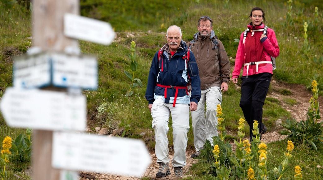 Skigebiet Feldberg mit einem Beschilderung und Wandern oder Spazieren sowie kleine Menschengruppe