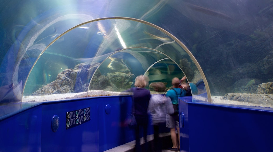 Blue Reef Aquarium which includes marine life as well as a small group of people