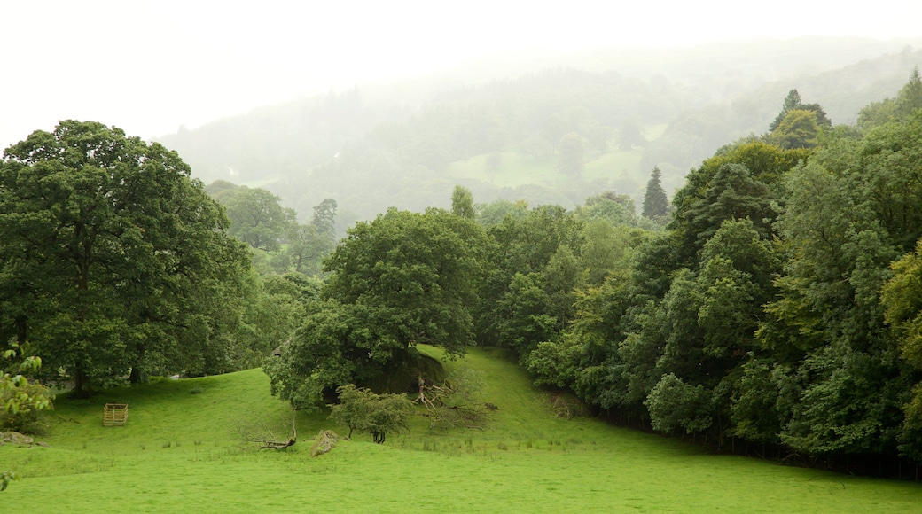 Lake District National Park showing a garden and mist or fog