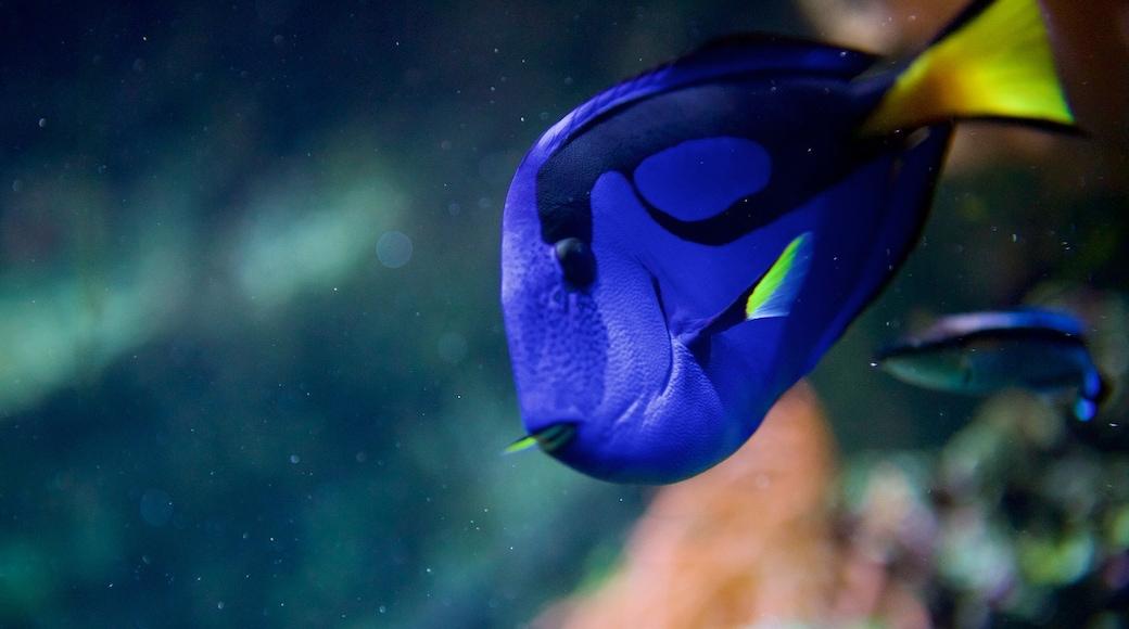 Blue Reef Aquarium which includes marine life