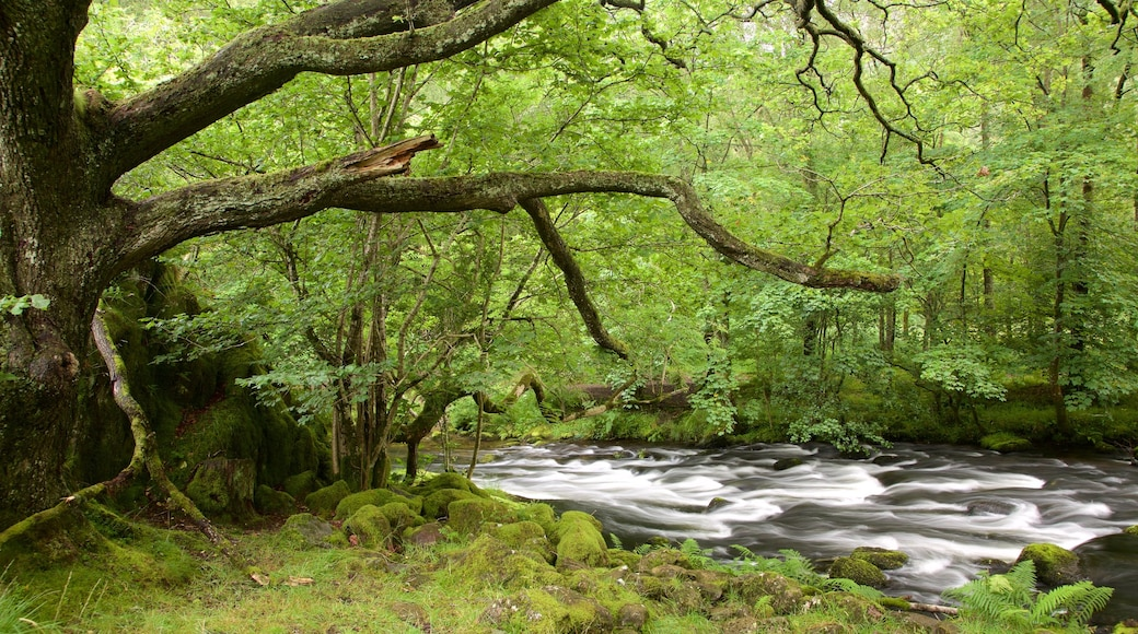 Lake District National Park which includes rainforest and a river or creek