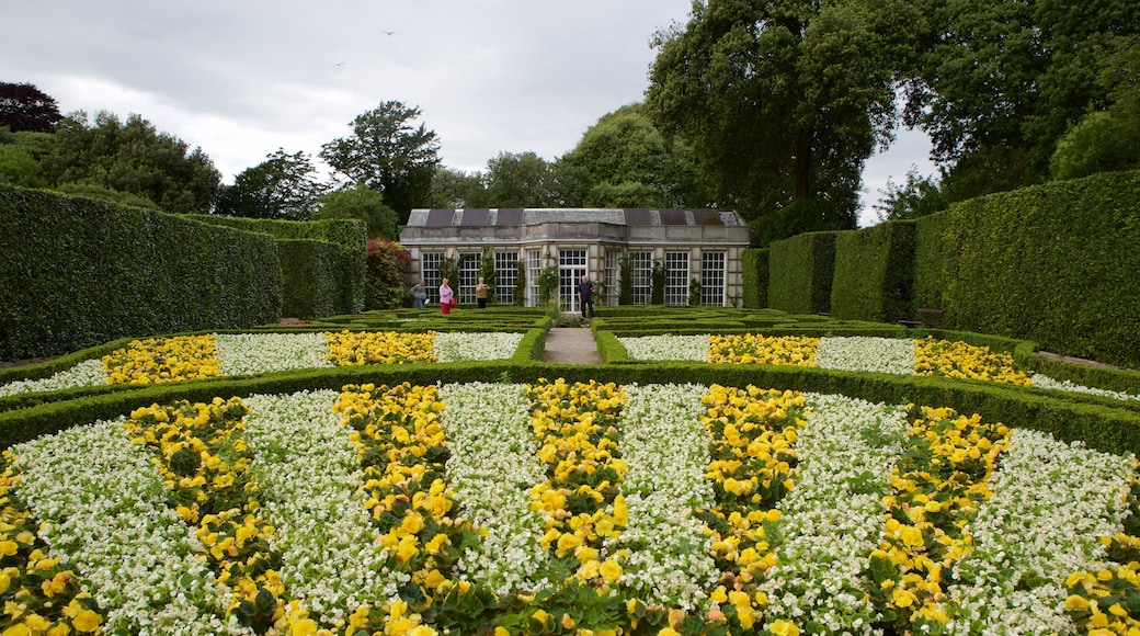 Mt. Edgcumbe showing flowers and a park