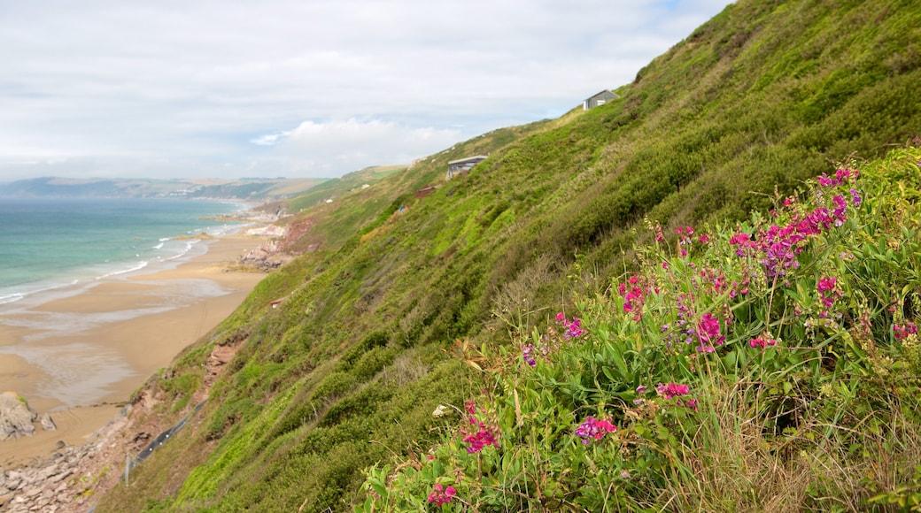 Plage de Whitsand Bay montrant plage et fleurs
