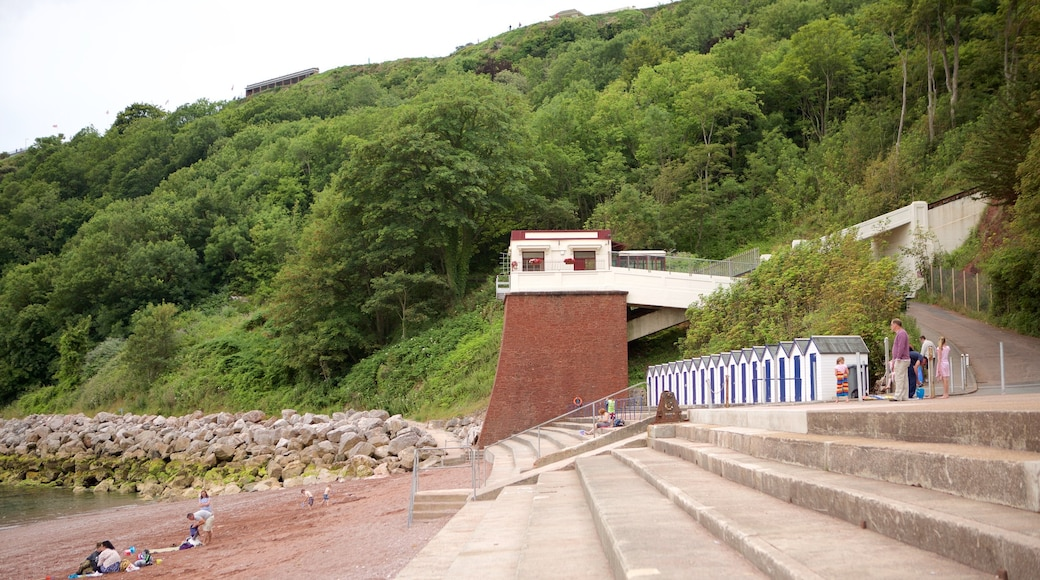 Babbacombe Beach showing forest scenes and general coastal views