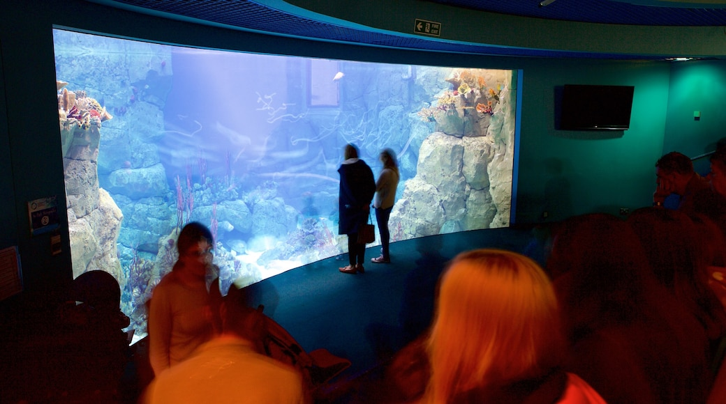 National Marine Aquarium qui includes vues intérieures et vie marine