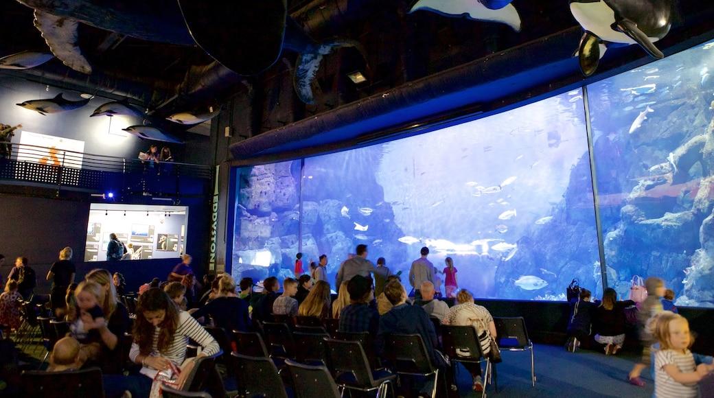 National Marine Aquarium montrant vie marine aussi bien que important groupe de personnes