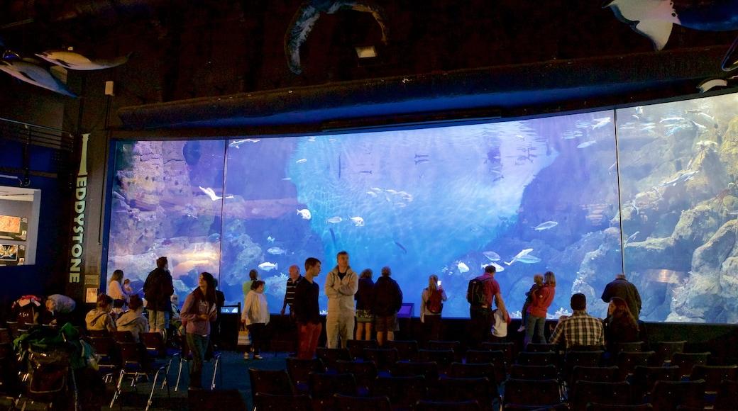 National Marine Aquarium mettant en vedette vie marine aussi bien que important groupe de personnes