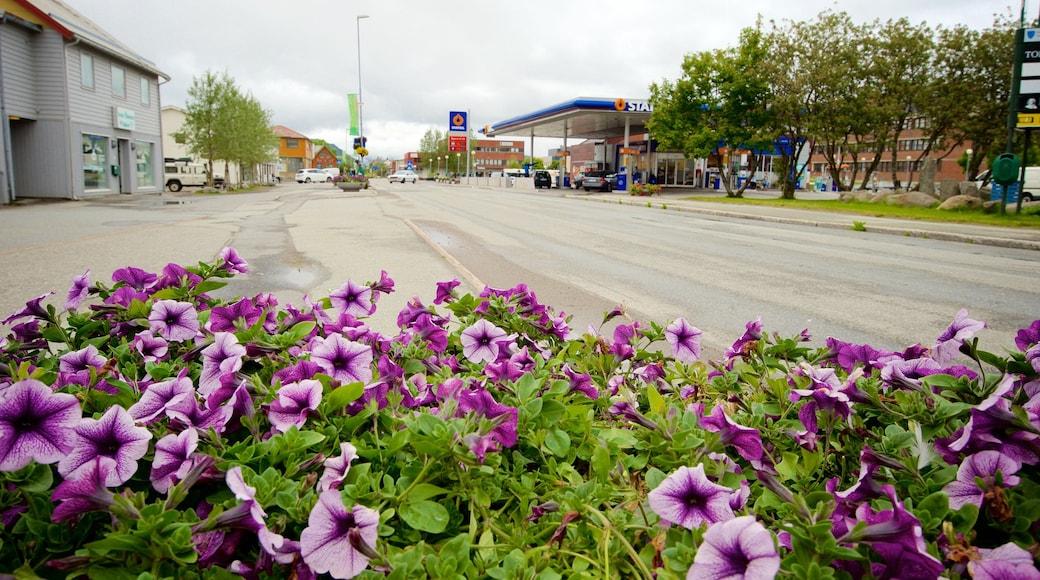 Leknes mit einem Blumen und Kleinstadt oder Dorf