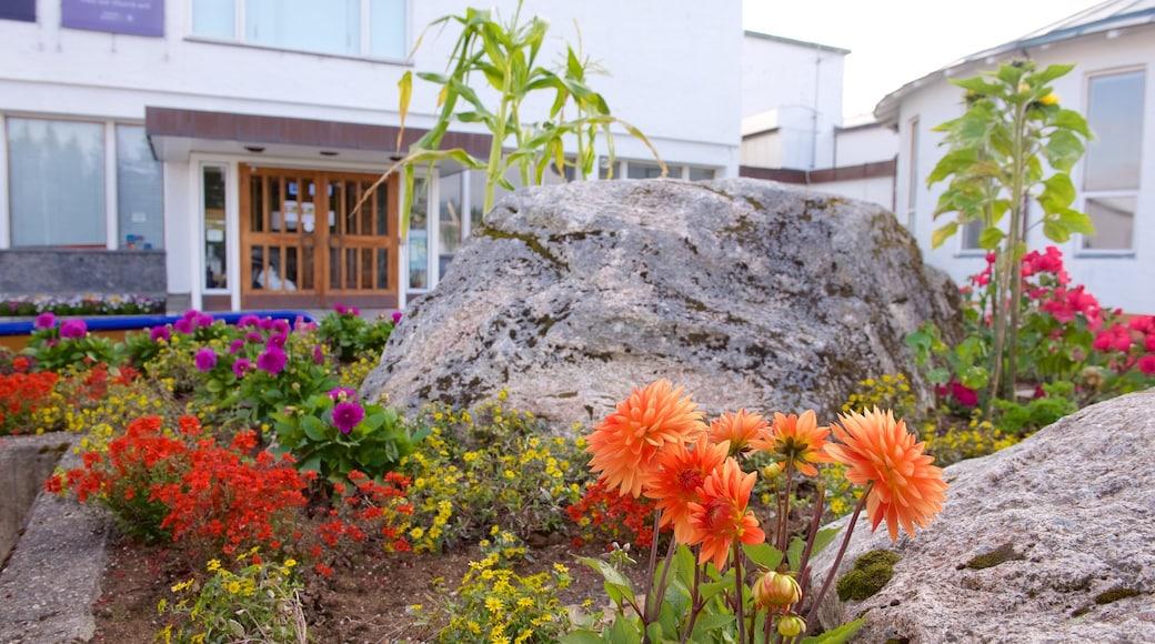 Tromssan yliopiston museo joka esittää puutarha