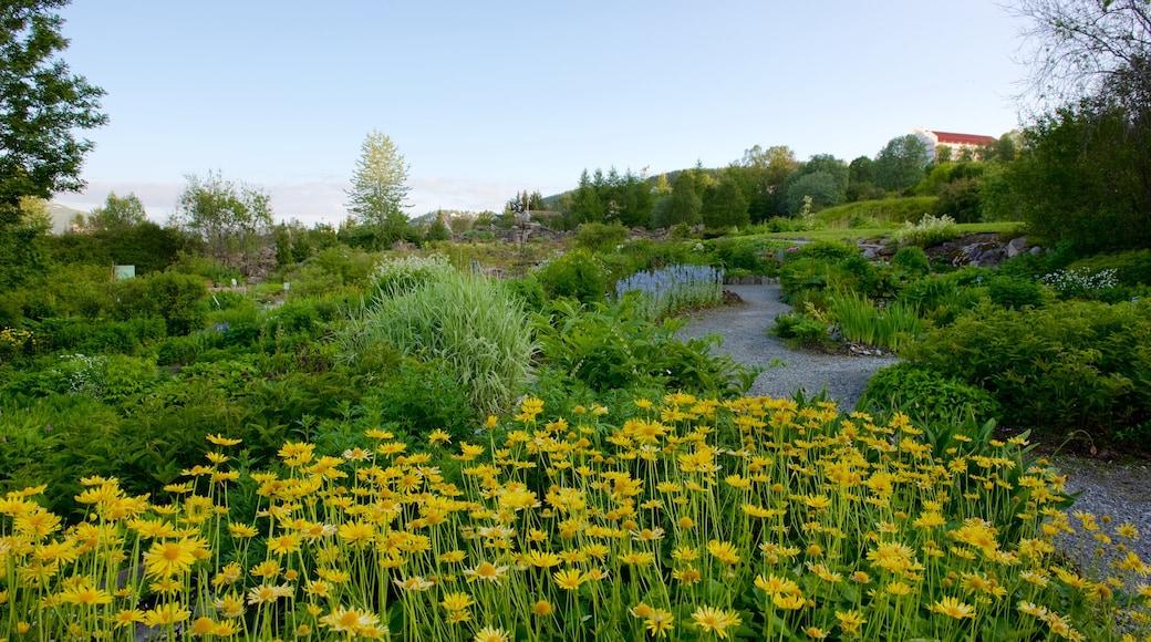 Arktisk-alpin botanisk hage fasiliteter samt hage og blomster