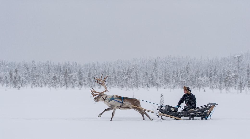 Salla joka esittää lunta ja maaeläimet