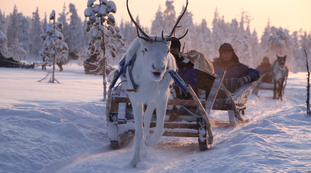 Salla joka esittää lunta, auringonlasku ja maaeläimet