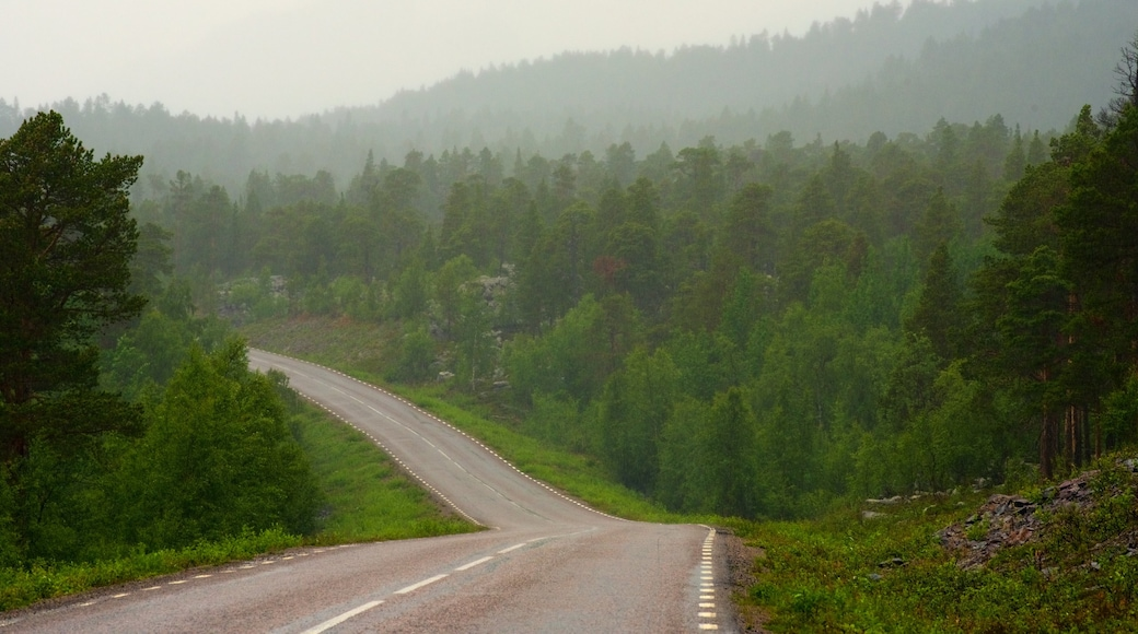 Stora Sjofallet National Park which includes forest scenes