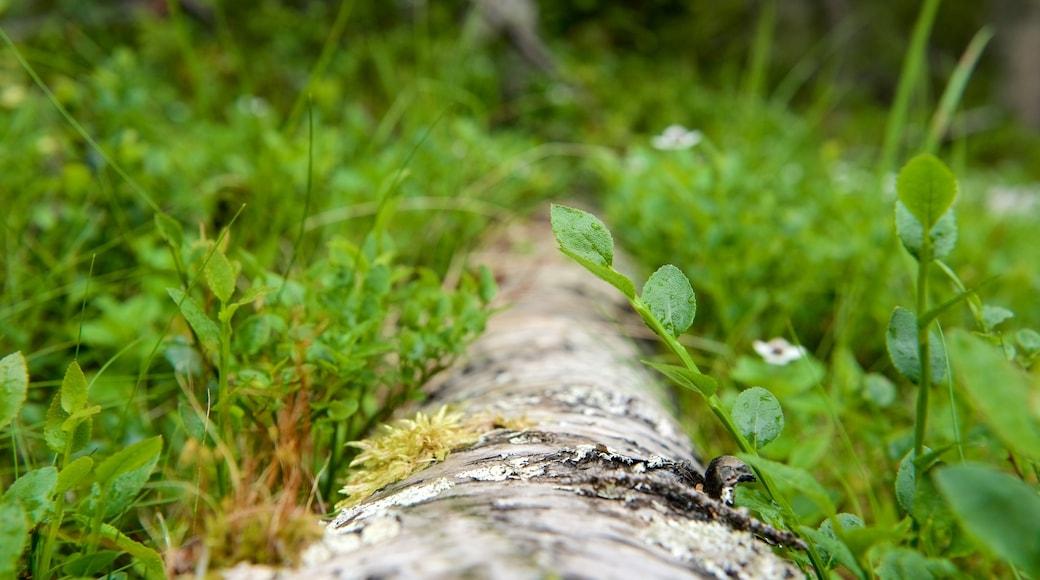 Muddus Nationalpark das einen Waldmotive