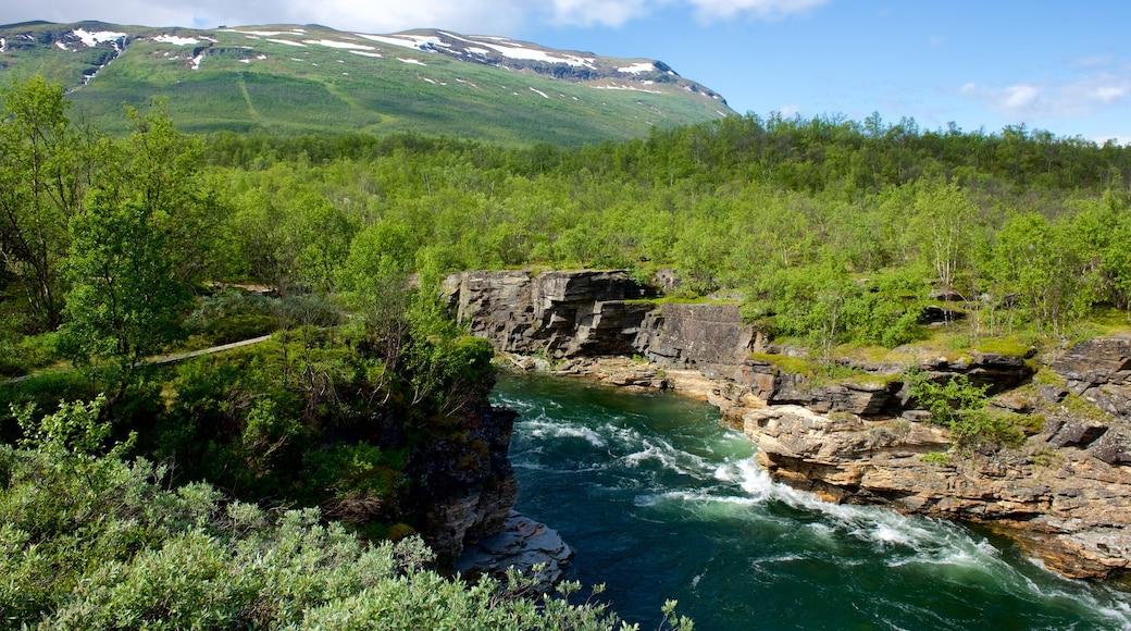 Abisko National Park welches beinhaltet Fluss oder Bach und Wälder