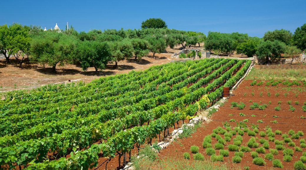 Brindisi showing farmland