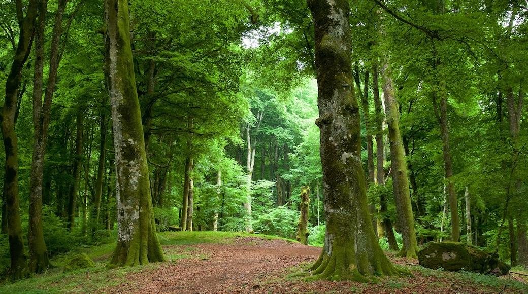 Soriano nel Cimino mostrando escenas forestales