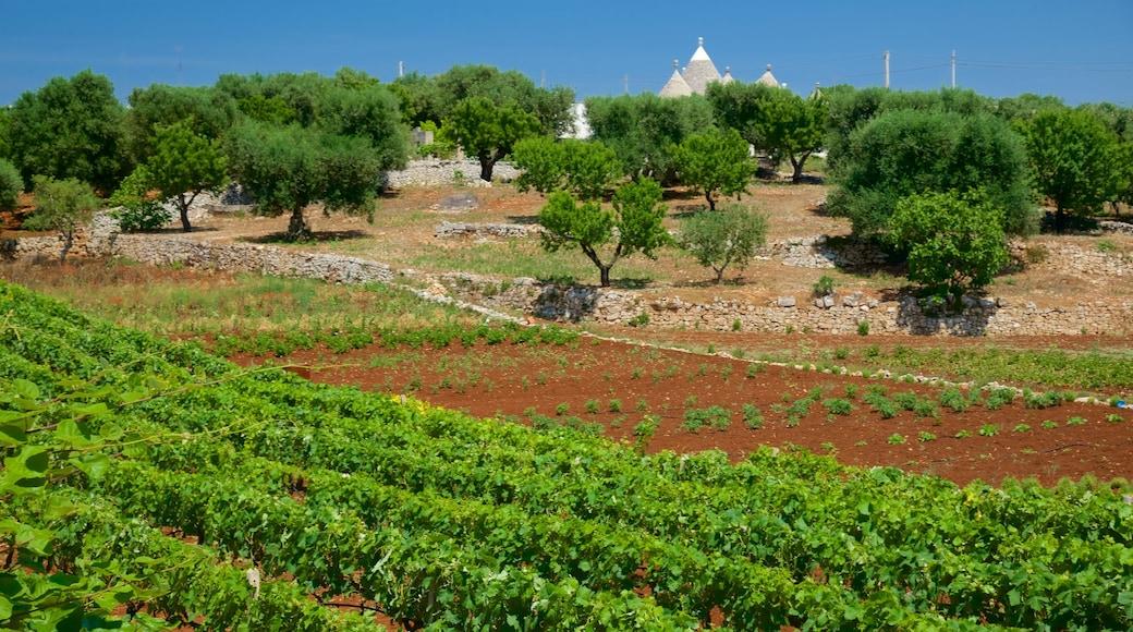 Puglia which includes farmland
