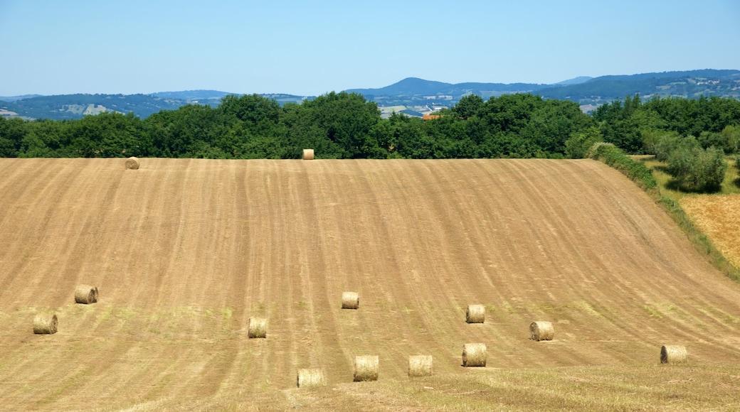 Toskana das einen Farmland