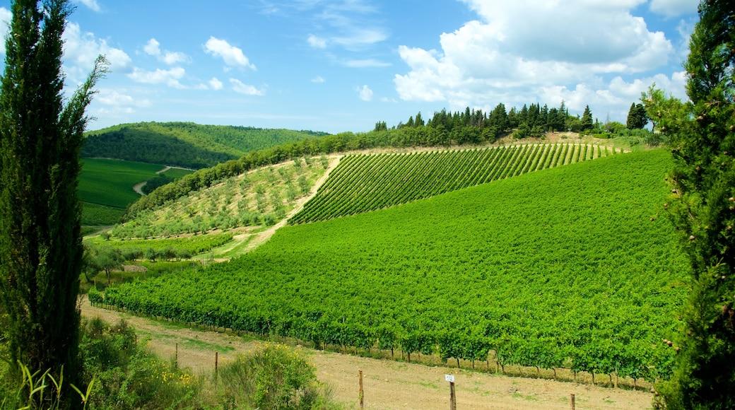 Chianti-Region welches beinhaltet Farmland