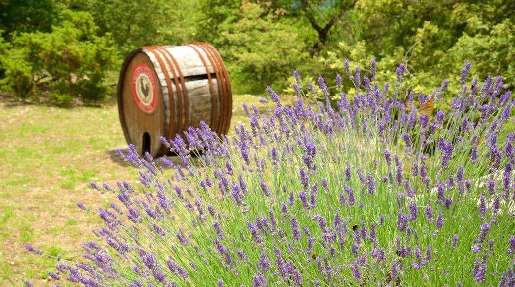 Chianti-regionen fasiliteter samt blomster