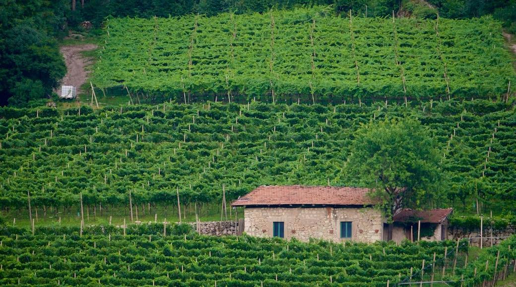 Trentino featuring farmland