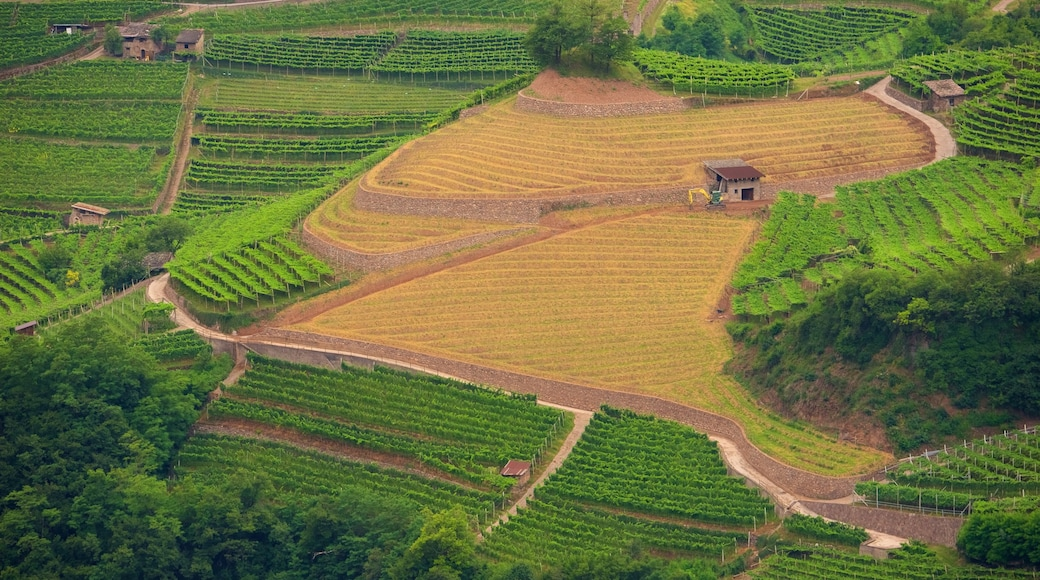 Trentino showing farmland