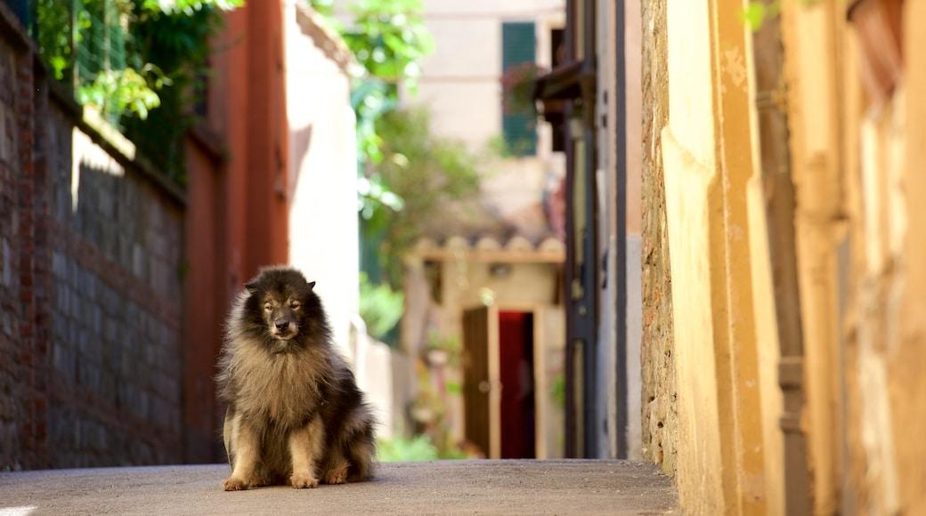 Perugia mostrando animali domestici