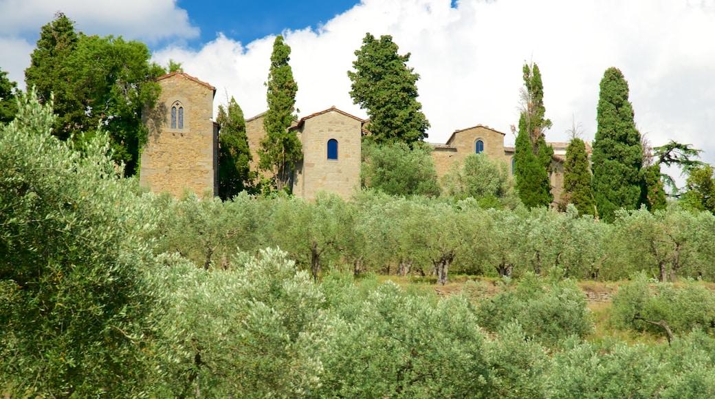 Cortona mostrando terreno coltivato