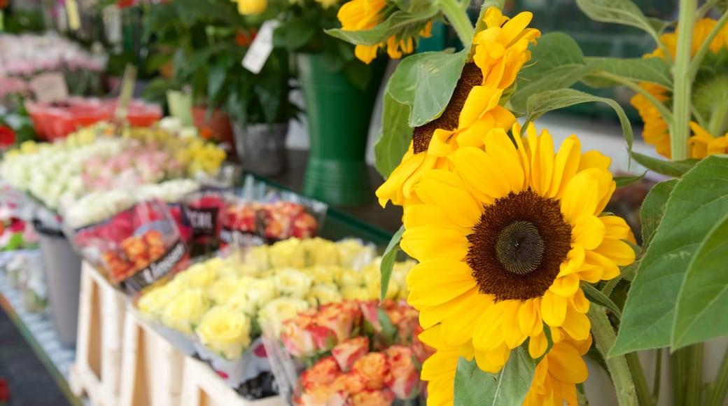 Bozen das einen Blumen und Märkte
