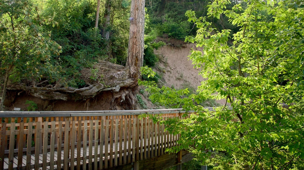 Renon mostrando ponte