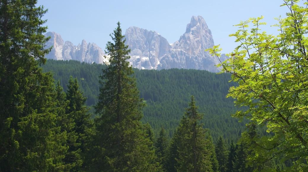 Trentino welches beinhaltet Waldmotive, Landschaften und Berge