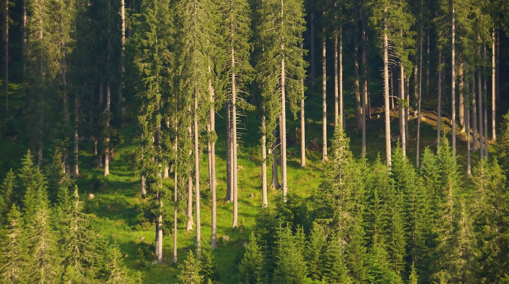 Trentino das einen Wälder