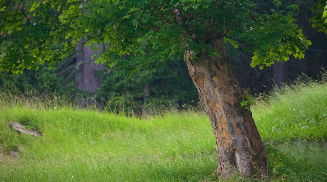 Trentino das einen Park und Waldmotive