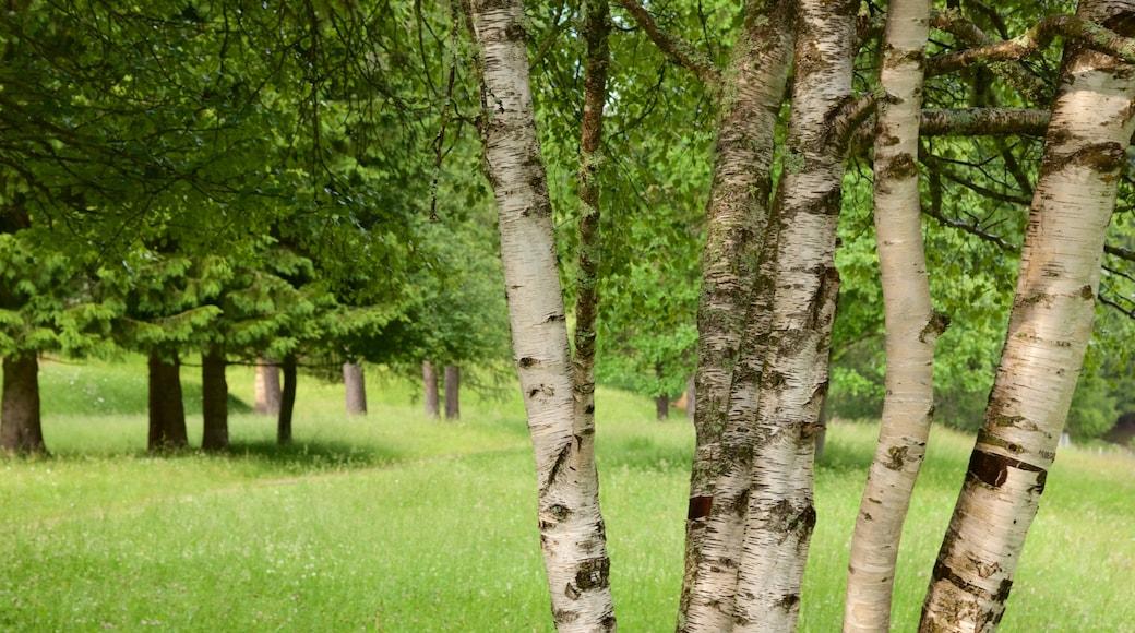 Trentino mit einem Wälder