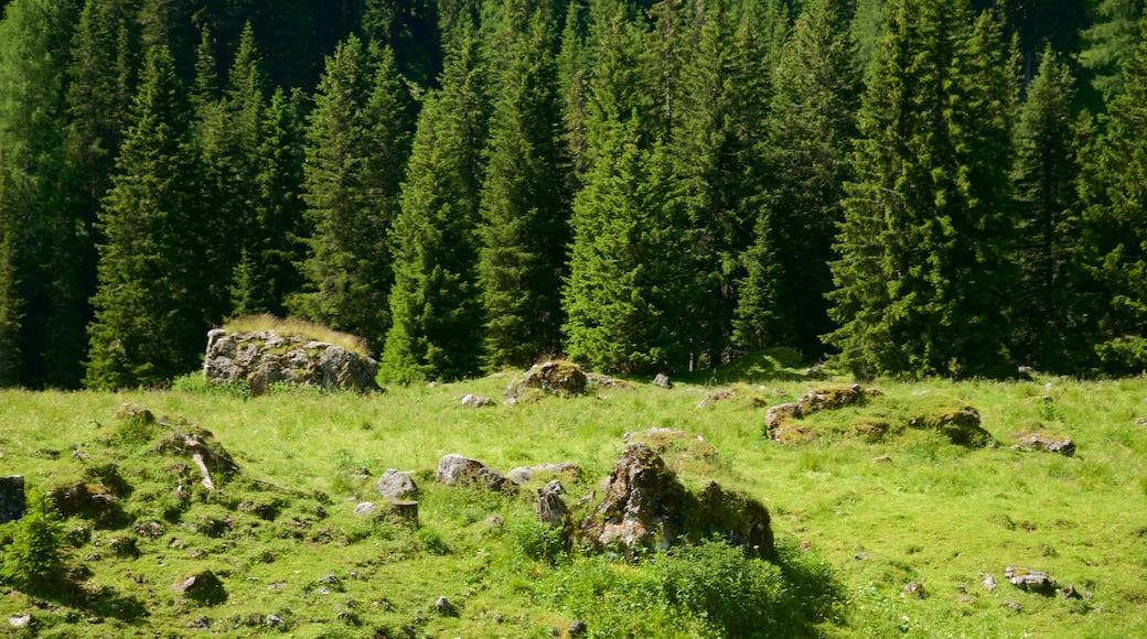 Trentino welches beinhaltet Waldmotive