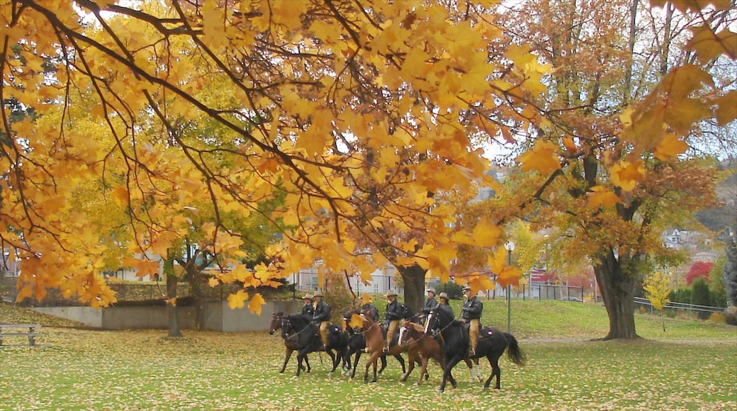 Kamloops showing autumn leaves, horseriding and a garden