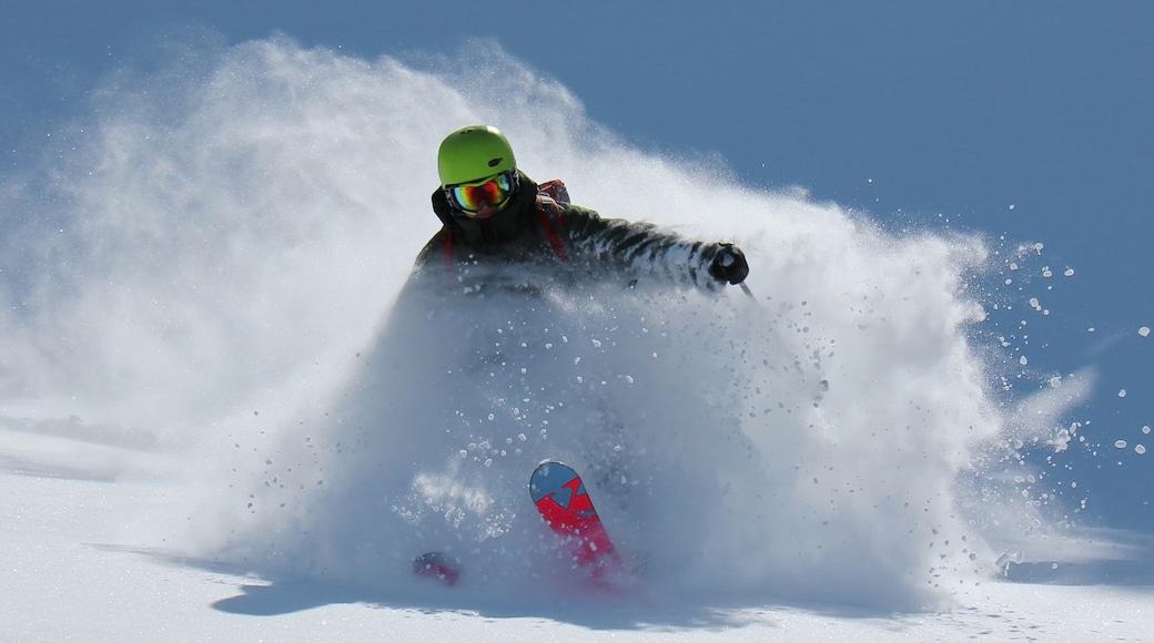 Mount Washington Alpine Resort featuring snow skiing and snow