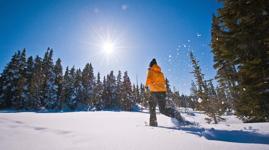 Mount Washington Alpine Resort which includes snow and snow shoeing