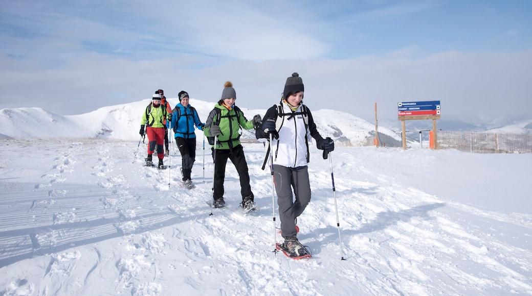La Molina Ski Resort toont sneeuw en sneeuwschoenwandelen en ook een klein groepje mensen
