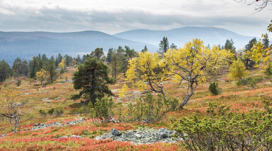 Ylläs johon kuuluu metsät, syksyn lehdet ja vuoret