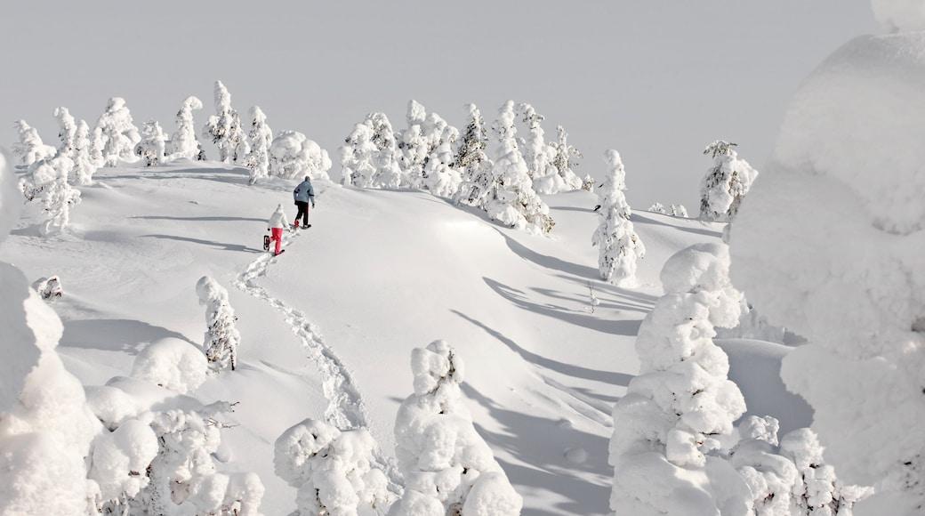 Ruka skiområde som viser vandring eller fottur, snø og trugegåing