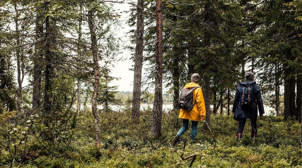 Rukan laskettelurinteet featuring patikointi tai kävely, järvi tai vesikuoppa ja metsänäkymät