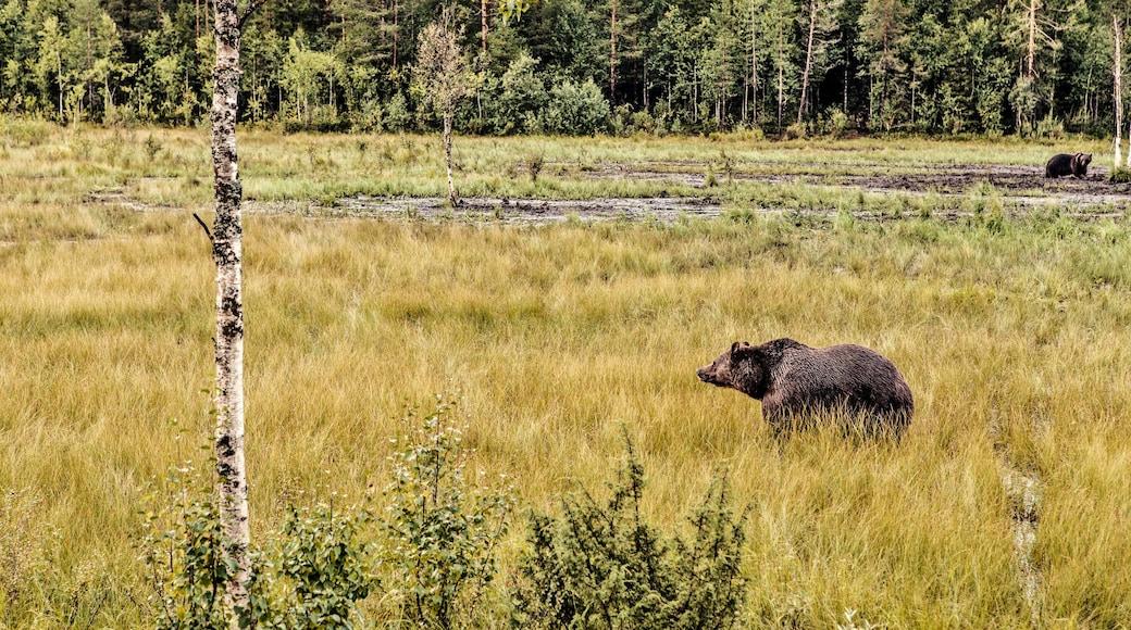 Rukan laskettelurinteet featuring maaeläimet ja metsänäkymät