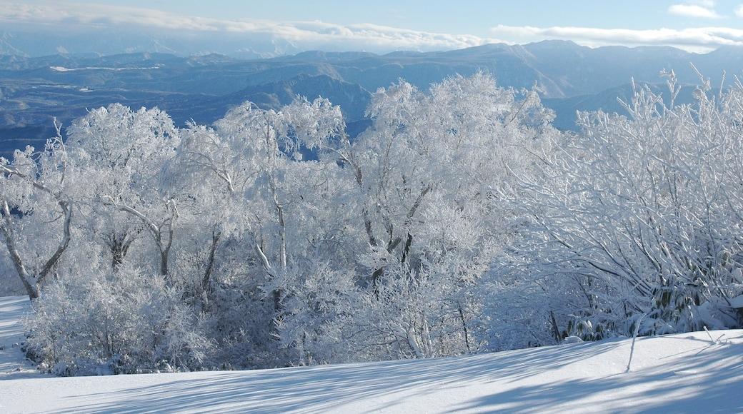Nozawa Onsen Snow Resort showing snow and landscape views